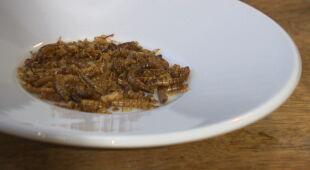 UE dopuszcza suszone larwy mącznika do konsumpcji. W kolejce szarańcze i świerszcze