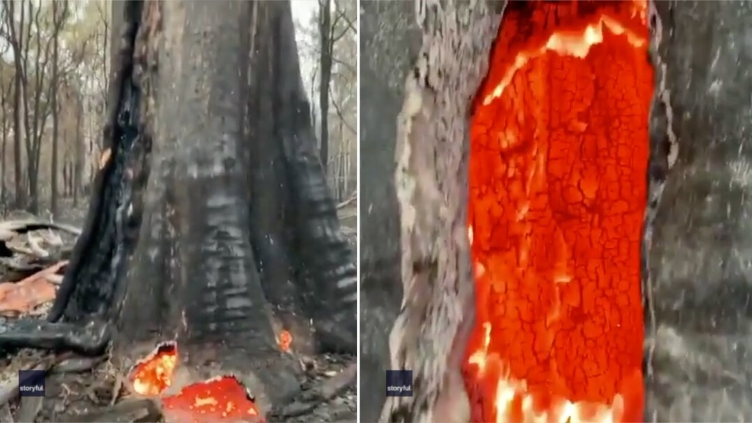 Rozgrzane do czerwoności drzewo po pożarze. Wygląda jak z filmu fantasy