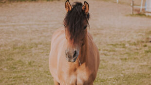"""Konie pomogą w walce z koronawirusem. """"Ten produkt uratuje życie, zanim szczepionka dotrze do ludności"""""""